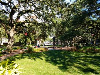 One of many huge oak trees in Savannah