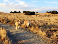 Boys enjoying the free roaming around the campground area